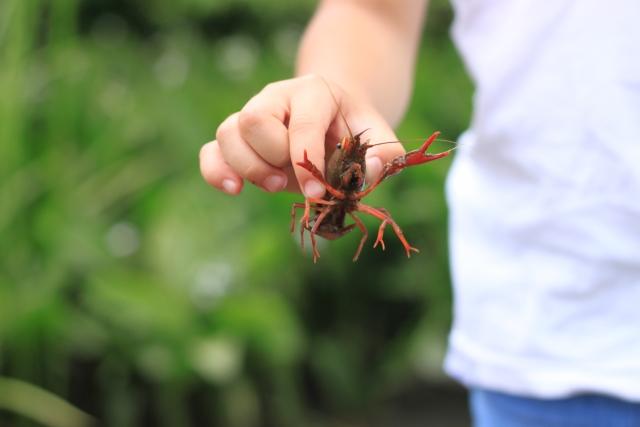 オオスナモグリって何?絶滅したはずの甲殻類の画像と発見した人物、場所